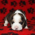 pups-190815-10