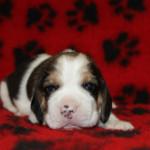 pups-190815-11