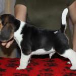pups-190815-14