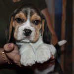 pups-190815-15