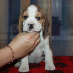 pups-190815-18