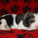 pups-190815-6