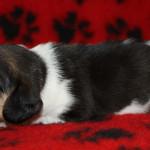 pups-190815-7