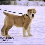 Romanov Dom Rodina