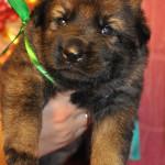 pups-no-300415-5