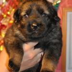 pups-no-300415-6