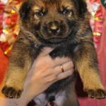 pups-no-300415-7