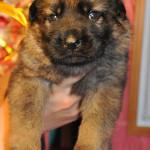pups-no-300415-8