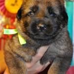 pups-no-300415-9